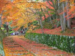美しい参道の紅葉
