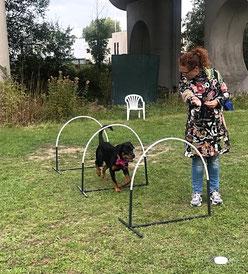De Hondenleerschool - Dé Hondenschool van Gouda - Hoopers