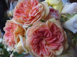お客様のお庭で大事に育ったバラです