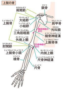 手や指も頭のゆがみや肩こりなどと関係する。