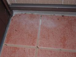 殺虫剤による効果 ヤスデの死骸