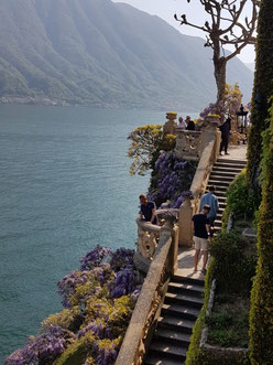 The wisteria at villa del Balbianello, Lake Como