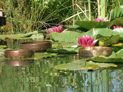 Klang-Traum am Teich