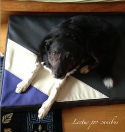 Orthopädisches Hundebett Lectus pro canibus in Größe M/L aus medizinischem Schaumstoff und hygienischen Kunstlederbezug