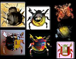 Ausschnitt der Käfervariationen