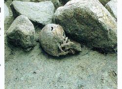 堀から出土した首は、首の骨が切断されていた