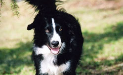 Chaser la border collie au 1022 mots