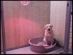 pension canine Isère Anim'heureux