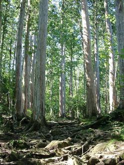 注文住宅ブログ画像 無垢材の木