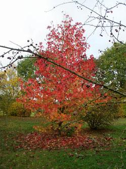 feuilles du rose au violet en passant par le rouge et l'orangé
