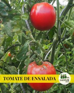 TOMATES DE ENSALADA - SEMILLEROS Y HORTALIZAS EN TENERIFE