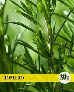 ROMERO EN TENERIFE