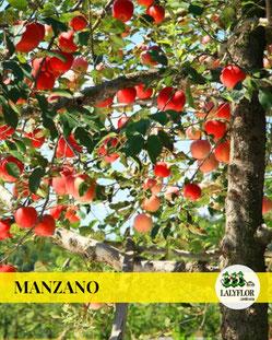 MANZANO EN TENERIFE