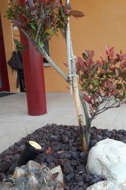 Spot d'éclairage extérieur pour éclairage végétaux décoratifs au jardin