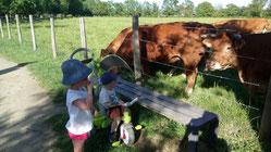 Promenade en famille entre la Sèvre Niortaise et notre troupeau de Limousines de la ferme de Chey