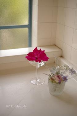 女性カメラ初心者 山手西洋館の花