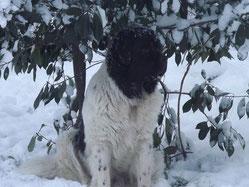 Schneebärchen :-)