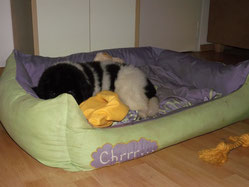 viiieeel zu großes Bettchen...noch jedenfalls! :-)