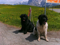 Usagi mit ihrer Schwester Udine im Tirolurlaub '12