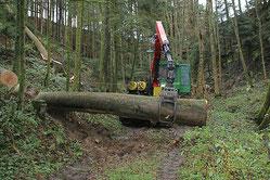 Holzschlagorganisation