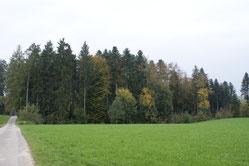 Waldrandpflege Biodiversität