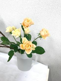 稽古花の薔薇