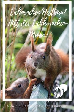 Eichhörnchen Nestbau _eichhoernchen-futterhaus