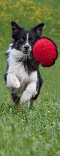 Anu spring mit viel freude einem roten Spielzeug nach