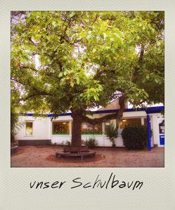 Grundschule Wiescheid Foto Schulbaum