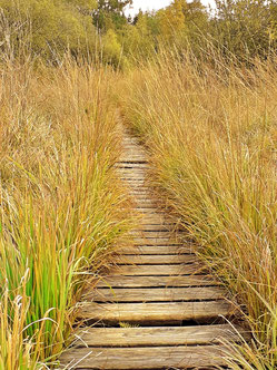 Urlaub in der Eifel : der Naturpark Hohes Venn lädt zu jeder Jahreszeit ein.