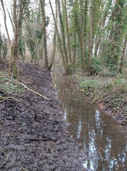 Restauration de réseau de fossés dans un marais