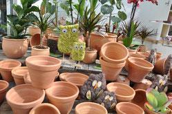 Garten- und Zimmerpflanzen - Blumentöpfe