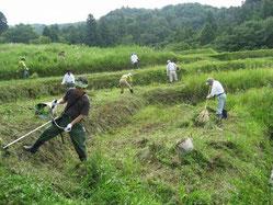 棚田の除草活動