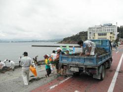 サンビーチでのアマモ回収作業の様子