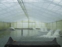 飼育中の池 ~水質や温度などを厳重に管理