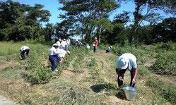 福祉施設の皆さんと綿花栽培