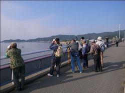 細江湖探鳥会の様子