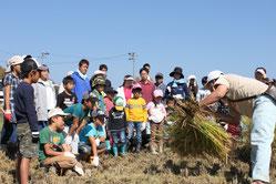 稲刈り体験イベントの様子