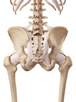 ぎっくり腰・急性腰痛は骨盤・仙腸関節の問題が原因となっていることがあります