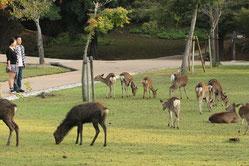 誰もが訪れる奈良公園も、切り口によって様々なガイディングが可能になります。