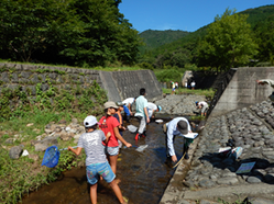 水生生物観察会