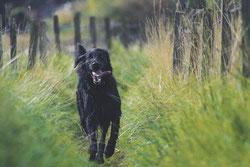 Les chiens peuvent prévoir les séismes ?