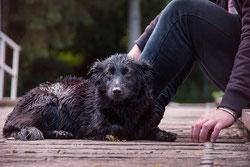 Les antioxydants dans les croquettes pour chiens