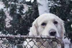 réforme de l'élevage canin en france