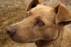 Idées reçus sur la soumission chez le chien