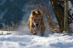 Quelles sont les limites de l'apprentissage canin ?