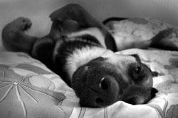 Effet cognitif de la séparation brève de son propriétaire chez le chien