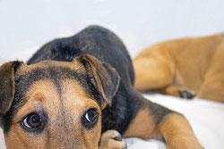 Pourquoi faire castrer mon chien ?