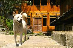 Les chien en Chine