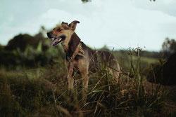 Les chiens ont-ils la notion de temps ?